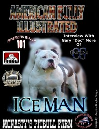 AMERICAN BULLY ILLUSTRATED